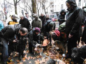 Demonstration für die Zusammengehörigkeit mit Hunden