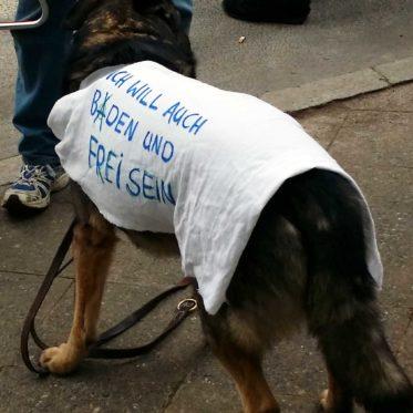 Hund mit dunklem Fell trägt ein weißes Tuch auf dem Rücken mit dem Spruch: Ich will auch baden und frei sein