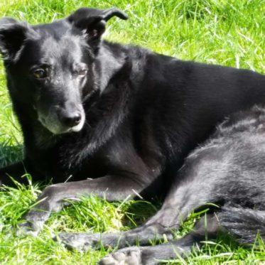 Hündin mit dunklem Fell liegt auf dem Rasen und genießt das Bad in der Sonne