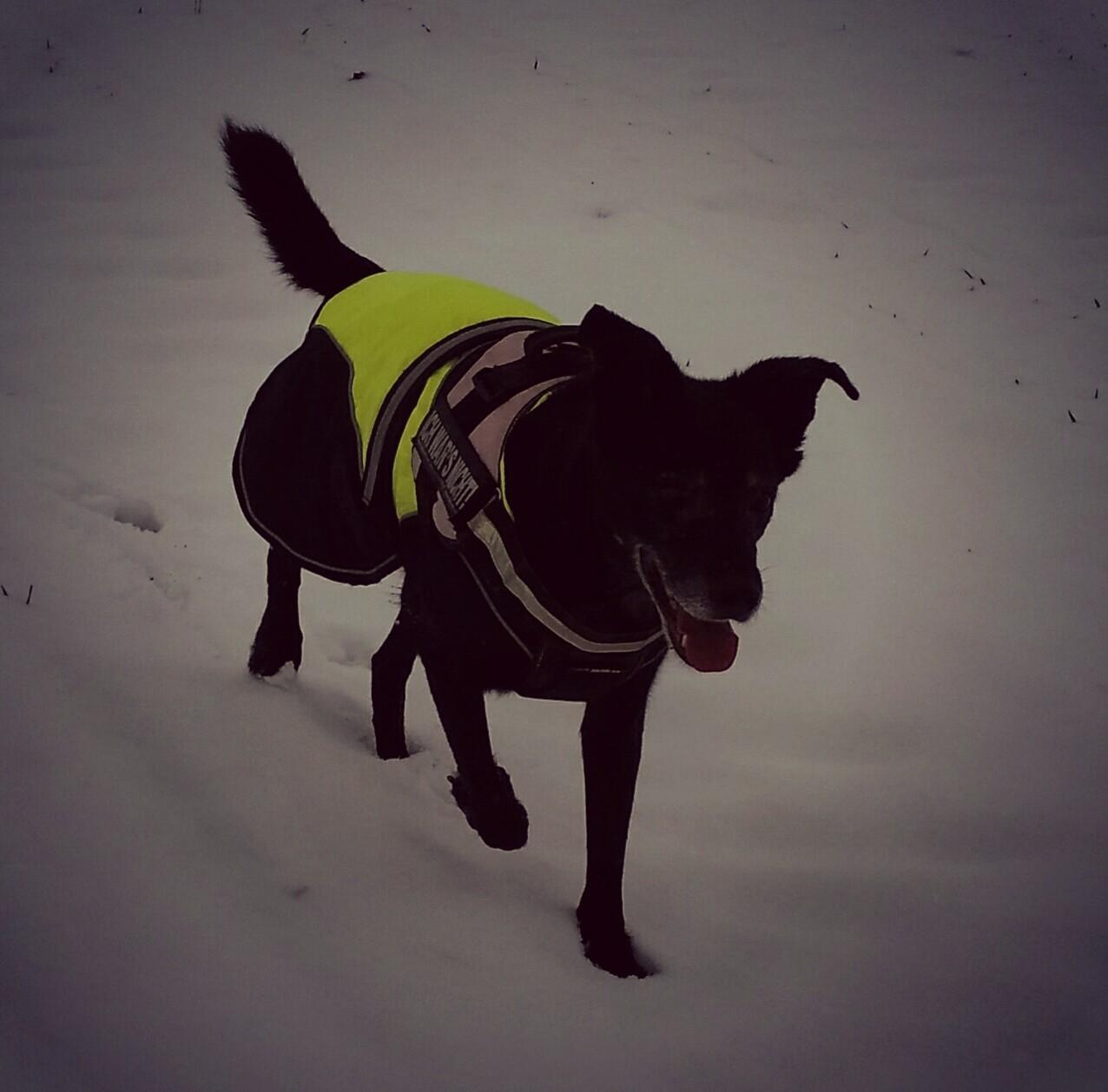 Hund mit reflektierender Decke mit integrierten Leuchtelementen