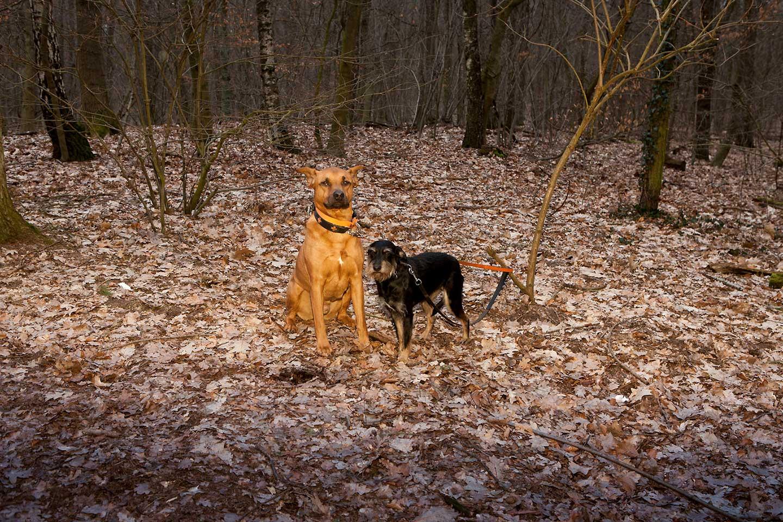 Foto von zwei Hunden im Hundeauslaufgebiet Grunewald