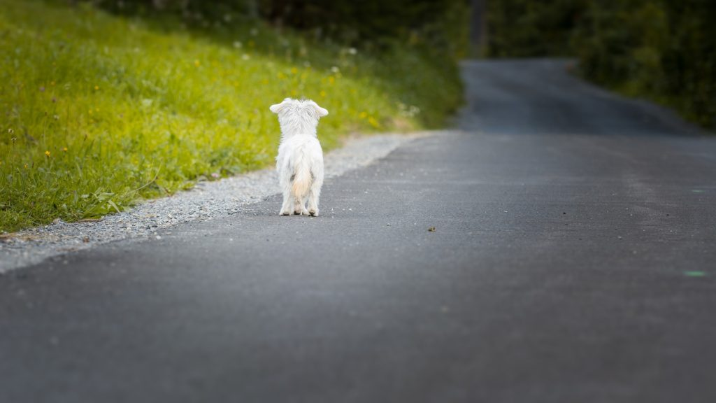 Hund auf der Strasse